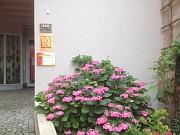 Blumen vorm Hotel