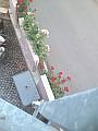 Rosen rund ums Hotel