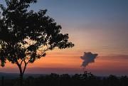 Baumsilhouette im Abendlicht