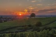 Sonnenuntergang hinter Weinbergen