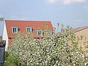 Kirschblüten mit Hotel im Hintergrund