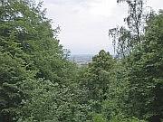 Wald am Schwanberg